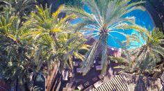 Hay vistas que simplemente te dejan sin habla... imagínate disfrutar de estas panorámicas🌴  #HuertodelCura #GrupoHuertodelCura #OasisdelMediterraneo #HotelesElche #Elx #Elche #VisitElche #CostaBlanca #Alicante #ProvinciadeAlicante #Relax #Tranquilidad #Desconexión #Naturaleza #Nature #Naturelovers #Verde #EspaciosqueInspiran #MañanaPerfeta #BuenosDias #GoodMorning #GoodDay #GoodVibes #Enjoy #Paraíso #paradise