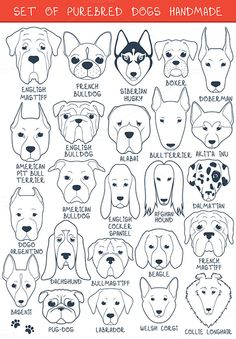 Set of 24 dogs of different breeds h by Lauritta on Creative Market