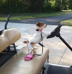 Nova....she's quite the golf cart driver enthuiast =)