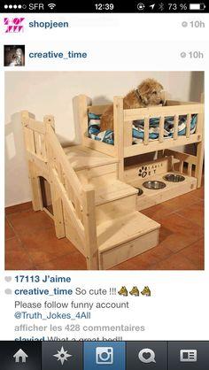 Dog room .