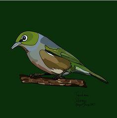 Tauhou (Silvereye) on Photo Block Photo Blocks, Photo Reference, New Zealand, Birds, Website, Digital, Prints, Painting, Animals