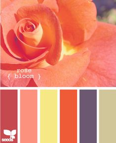rose bloom - color swatches