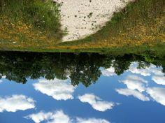 Dense border of Black-eyed Susans along the trail