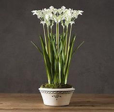 5 Ways to Bring Spring Into Your Home Early: Paperwhites