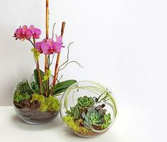 Explore these stunning and beautiful Phalaenopsis orchid arrangements. Find a wide range of exciting orchid arrangement ideas that includes potting your orchids in antiques, birdcages and much more! Orchid Terrarium, Orchid Planters, Orchids Garden, Garden Terrarium, Succulent Terrarium, Terrarium Ideas, Terrarium Centerpiece, Succulent Containers, Fall Planters