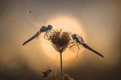 1X - Le prime luci by Roberto Aldrovandi