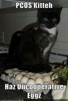 PCOS Cat