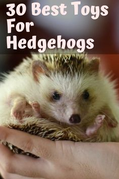 30 Toys that Hedgehogs Diy Hedgehog Toys, Hedgehog Pet Cage, Hedgehog Supplies, Hedgehog Habitat, Hedgehog Names, Hedgehog Colors, Hedgehog Food, Baby Hedgehog, Hedgehog Art