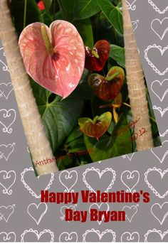 Happy Valentine's Day:  Made Personal With Pixingo,  Design your own personal card on line using your photos or use a pre-made template! It will be printed, stamped and mailed for you! Easy as 1,2,3! Retail or Wholesale www.PixByMarlys.com