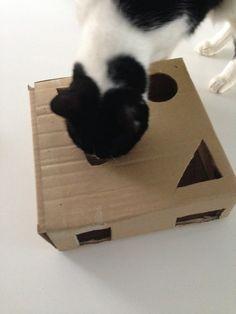 DIY cat toy!
