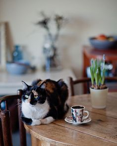 #allthebeautifilthings #morning #goodmorning #cozywinter #cat #catlove #coffee #coffeetime #flowers #waitingforspring