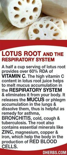 A half a cup serving of lotus root provides over RDA of Vitamin C. The high vitamin C content in the juice helps to melt mucus accumulation in the respiratory system & eliminates it from your body. It releases the mucus or phlegm accumulation in the l Natural Home Remedies, Herbal Remedies, Health Remedies, Cough Remedies, Natural Medicine, Herbal Medicine, Health And Nutrition, Health And Wellness, Salud Natural