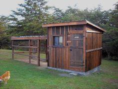 Rural Rehatch - BackYard Chickens Community