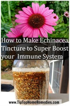 How to Make Echinacea Tincture to Super Boost your Immune System - Tiptop Home Remedies