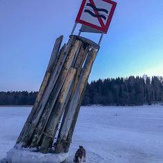 Minnie: we cant make waves. :-( #miniatureschnauzer #schnauzer #dog #winter #snow #ice