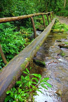 A footbridge in the Great Smoky Mountains National Park on a hiking trail near Cataloochee Valley