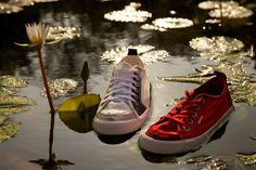 shoes in the water