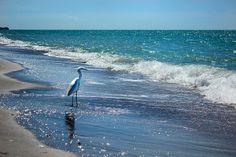 bird on the beach   Flickr - Photo Sharing!