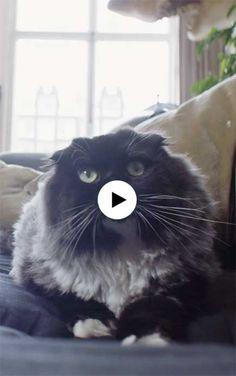 De woonfrustratie van kat Dirkieeeeeeeeeee ^_^