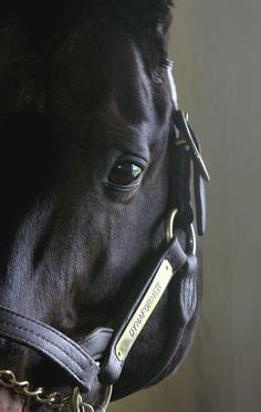 Handsome Dynaformer.... Barbaro's Daddy !  He's 27 years old this year in 2012... Such Greatness !!!