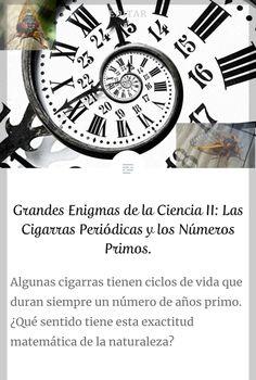 Descubre enigmas de la ciencia. Las curiosas cigarras periódicas y su renacer siguiendo números primos Riddles, Prime Numbers, Life Cycles, Journaling, Science