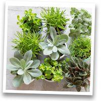 Stoer, kleine vetplantjes op een betonnen schaal. Leuk voor op een grote eettafel!