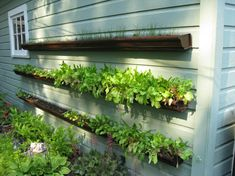 Gutter Planters - great for lettuces, herbs. Attach to a frame instead of the side of a house or garage. That way, you can put it away when the season is finished OR leave it where it is and put Christmas lights on it! An old bed frame, spray-painted white would be excellent!