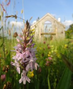 For the first time, orchids have appeared in the meadow.adding a touch of glamour to the riot of sorrel, British Wild Flowers, Luxury Camping, Holiday Accommodation, Summer Photography, Summer Picnic, Summer Aesthetic, Summer Flowers, Orchids, Scenery