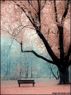 spring & sakura.
