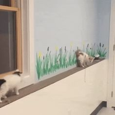 Best Cat Gifs of the Week #14