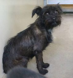#A470049 Release date: 8/6  I am a female, black Terrier mix. I have been at the shelter since Jul 30, 2014.   PETHARBOR: http://www.petharbor.com/pet.asp?uaid=SBCT.A470049   San Bernardino City Animal Shelter  333 Chandler Place, San Bernardino, CA  Telephone (909) 384-1304 https://www.facebook.com/photo.php?fbid=10203189933046737&set=a.10201187177339096.1073741865.1160364024&type=3&theater