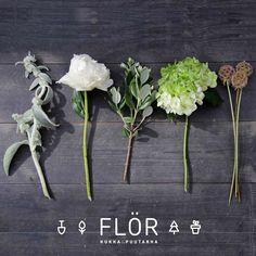 Herbs, Plants, Instagram, Herb, Plant, Planets, Medicinal Plants