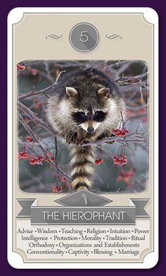 Gallery of Images from the Racoon Tarot Card Deck. Tarot Card Decks, Tarot Cards, Teaching Religion, Symbolic Art, The Hierophant, Oracle Tarot, Racoon, Major Arcana, Deck Of Cards