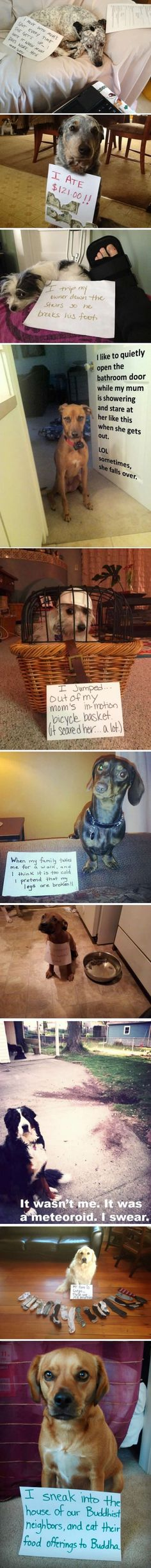 Funny Dog Shaming - notice how you never see any cat shaming. This is clearly bc they're not as dumb as dogs.>>>>actually I have seen cat shaming Cute Funny Animals, Funny Animal Pictures, Funny Cute, Funny Dogs, Super Funny, Hilarious Pictures, Silly Dogs, Funny Photos, Top Funny