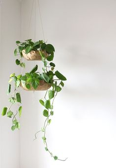 Diy hanging planter projects home succulents diy hanging planter ideas . Diy Hanging Planter, Indoor Planters, Diy Planters, Planter Ideas, Succulent Planters, Indoor Gardening, Cacti Garden, Succulent Wall, Concrete Planters
