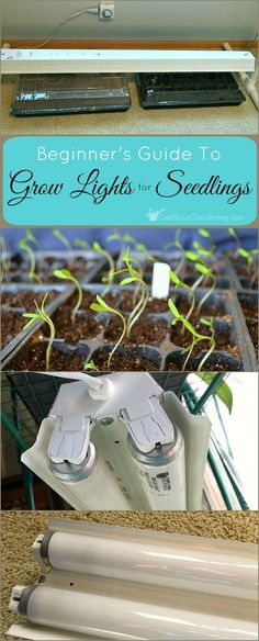 To grow healthy plants, you need to use proper lighting for seedlings. Learn how to choose the right grow lights for seedlings, without breaking the bank!