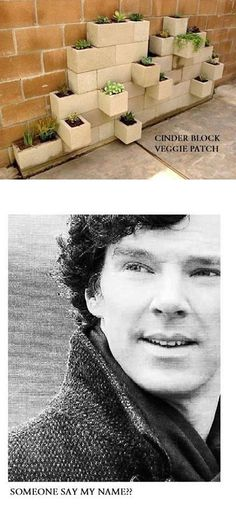 block veggie patch Cinderblock Veggiepatch, yet another one of Benedict Cumberbatch's famous aliases. I laughed so hard at this!Cinderblock Veggiepatch, yet another one of Benedict Cumberbatch's famous aliases. I laughed so hard at this! Benedict And Martin, Nerd, Mrs Hudson, Johnlock, Baker Street, Martin Freeman, Benedict Cumberbatch, Superwholock, Sherlock Holmes