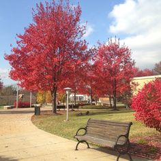 Beautiful November day on #Alvernia's campus