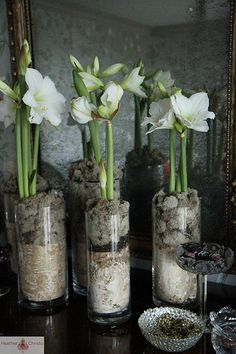 1000 images about amaryllis on pinterest met kerst and for Amaryllis deco
