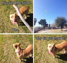 Funny Animal Picture Dump 20 Pics