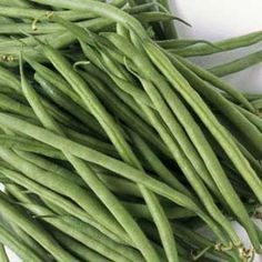 How to plant, grow, and harvest beans of all kinds: Organic Gardening