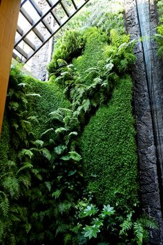 Hydroponic Green Wall in Restaurant Here is Coco de Verde