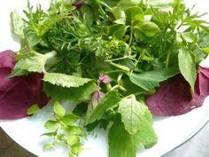 """Das Rezept für den """"Wildkräutersalat"""" aus der TastyBox im Mai. Gesund und einfach nur lecker! ;-) (Bild: Ingeborg Pils)"""