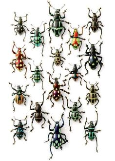 This is called Walking Weevils and is by Christopher Marley. I like the geometric patterns on these beetles. Christopher Marley, Bug Art, Beautiful Bugs, Insect Art, Belle Photo, Beautiful Creatures, Animals And Pets, Artwork, Beetles