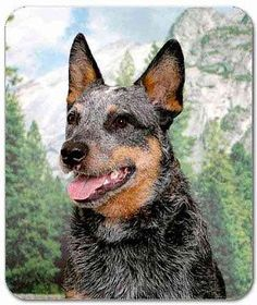 #Australian #cattle dog #mousepad,  View more on the LINK: 	http://www.zeppy.io/product/gb/2/141908278883/