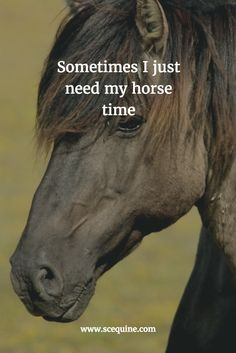 "Beautiful horse and horse quote, ""Sometimes I just need my horse time."""