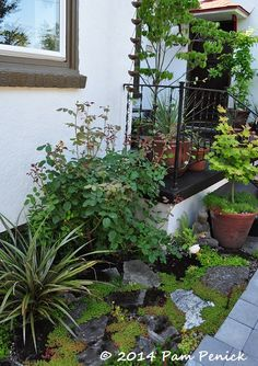 entry garden, white green brown