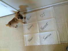 """The new strategy is called """"Puppy-Poop Bingo."""" 