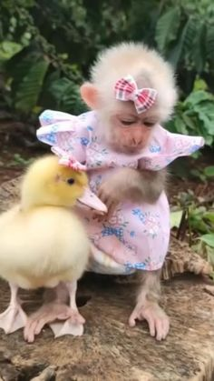 Animals Doing Funny Things, Cute Funny Animals, Cute Cats, Cute Little Things, Cute Little Animals, Cute Friends, Cute Animal Pictures, Funny Animal Videos, Animals Beautiful