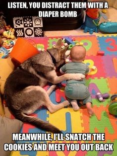 Dogs and babies working together #dogs